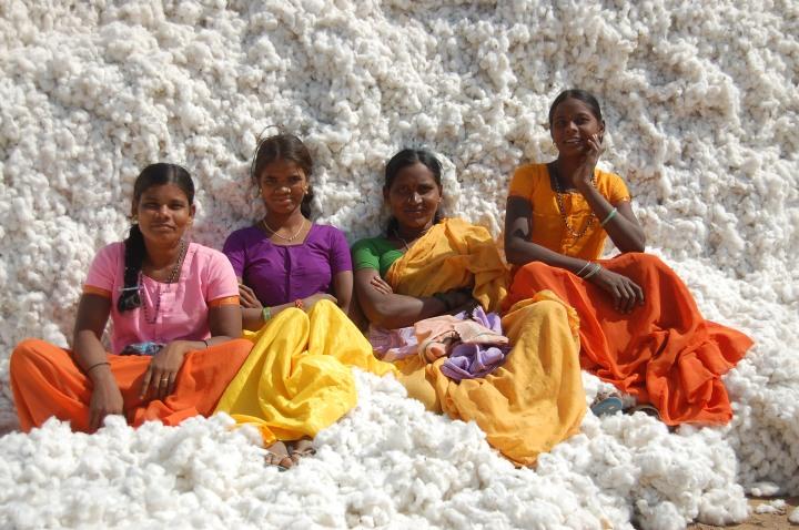 Plantação de algodão na Índia